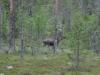 zweden-12-juni-14-Medium